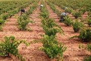 ASAJA Ciudad Real informa que unos 15.000 agricultores y ganaderos no han cobrado el anticipo del 70% de la PAC