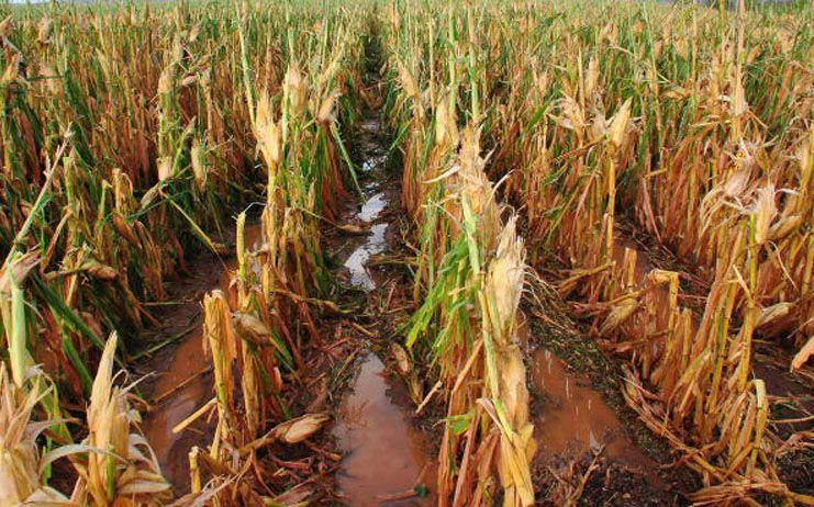 La Organización Agraria pide medidas excepcionales para los productores agrarios con cultivos dañados