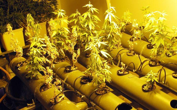 Desmantelado un laboratorio clandestino en una vivienda unifamiliar de Toledo donde se cultivaba marihuana
