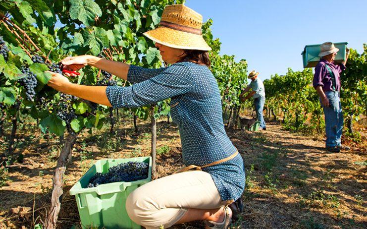 La afiliación de personas extranjeras a la Seguridad Social continúa unida a la estacionalidad y a las campañas agrícolas, donde hay que combatir el fraude y el empleo irregular