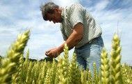 Merino denuncia que Page debe a agricultores y ganaderos de Castilla-La Mancha más de cien millones