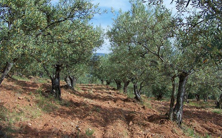 La Diputación de Toledo organiza una jornada formativa sobre los residuos de poda del olivar