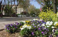 Azuqueca contará con más de 4.000 flores y casi 500 metros cuadrados de césped en la campaña de plantación de primavera