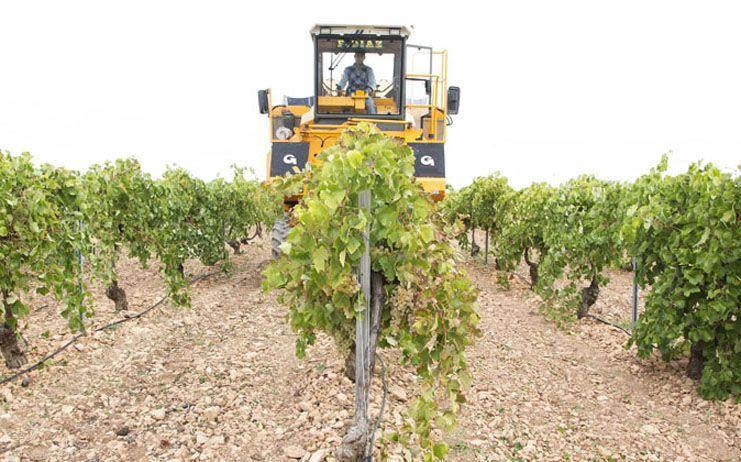 La Fundación 'Tierra de Viñedos' y la OIVE se unen en un proyecto piloto en España para promocionar la cultura del vino en Castilla-La Mancha