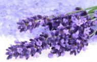 Brihuega espera cerca de 20.000 visitas este año para el periodo de floración de la lavanda