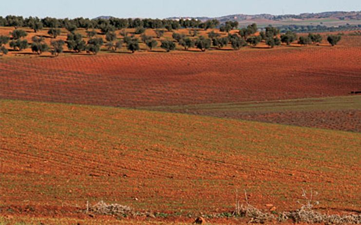"""El Gobierno regional muestra su """"compromiso absoluto"""" con la agricultura de conservación y la política forestal en la lucha contra el cambio climático"""