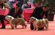 Ramos destaca a Talavera Ferial como centro internacional de los certámenes caninos con récord de participantes