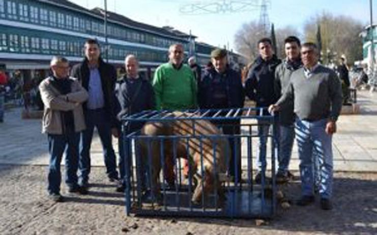 PACMA solicita el decomiso del 'guarrillo' de San Antón de Almagro