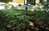 Detenidos dos vecinos de Ossa de Montiel (Albacete) e investigado un tercero por cultivar marihuana