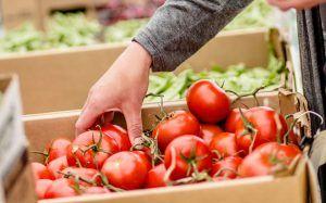 El Gobierno regional pone a disposición del sector agrario el trabajo de las Oficinas Emplea y las ayudas para el desplazamiento y alojamiento de trabajadores agrícolas