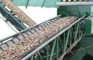 ASAJA Socuéllamos insta a los industriales a publicar los precios de la uva urgentemente