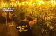 Desmantelado en La Roda (Albacete) un laboratorio de cultivo de cannabis sativa compuesto por 270 plantas