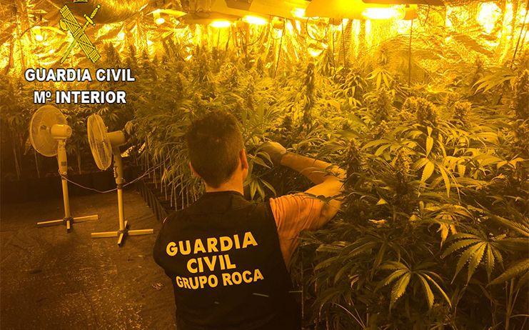 La Guardia Civil detiene a tres personas con una plantación profesional de marihuana en Guadalajara