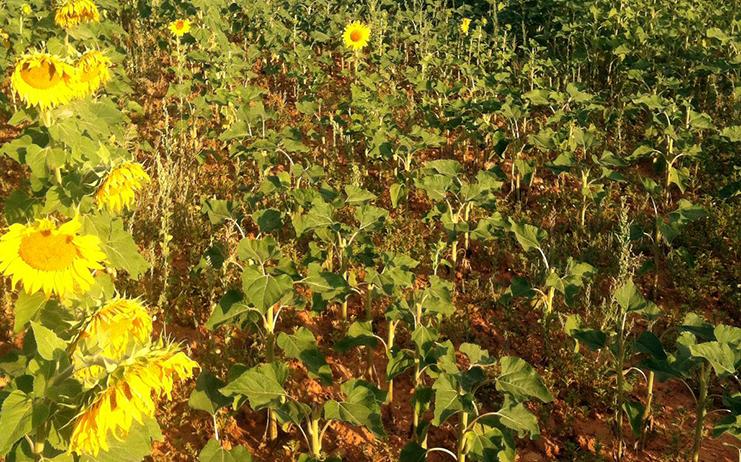 Las Administraciones siguen sin resolver el problema de los daños de fauna silvestre en Castilla-La Mancha