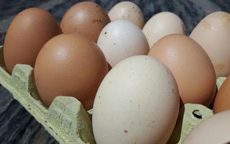 Llega a España la primera partida de huevos contaminados con fipronil