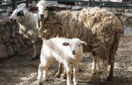 Nacen nuevas crías en el Zoo municipal de Guadalajara