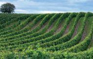 Castilla-La Mancha apuesta por la reutilización de parte de las aguas residuales para que la agricultura cuente con más acceso a este recurso