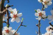La primavera llega este martes a las 17.15 horas y tendrá 92 días