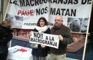 Recogen más de 4.500 firmas contra una macrogranja de cerdos en Pozuelo y Argamasón que criaría 550.000 lechones al año