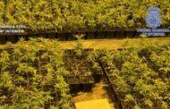 14 detenidos de origen chino y casi 13.000 plantas de marihuana incautada en Toledo y Madrid