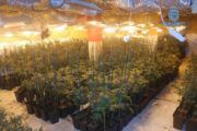 Desmantelado un laboratorio clandestino de cultivo de marihuana en Olías del Rey (Toledo)