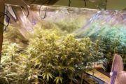 La Policía Nacional detiene a dos personas por el cultivo de cannabis en Magán (Toledo)