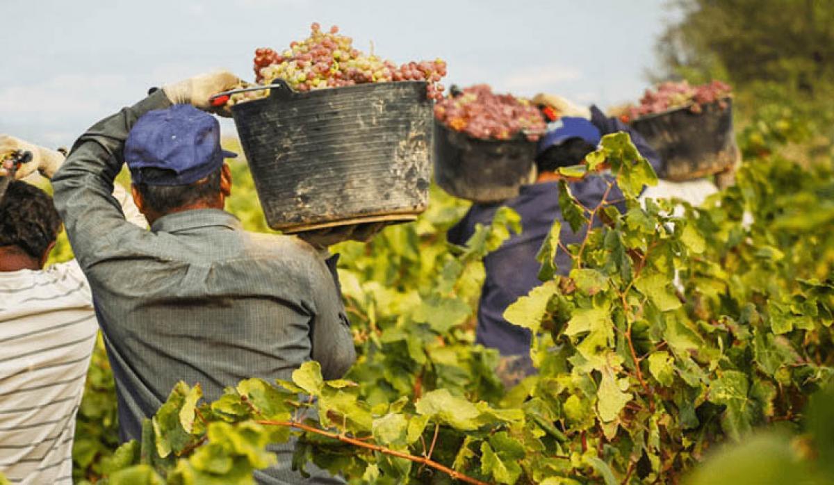 ASAJA CLM denuncia ante la AICA que algunas bodegas están recibiendo uva sin dar a conocer los precios