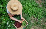 CCOO pide dar un impulso a la futura Ley del Estatuto de Mujeres Rurales de CLM para fomentar la igualdad y el empleo de calidad en el mundo rural