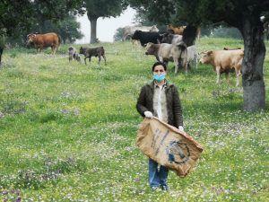 El Gobierno de Castilla-La Mancha ha ingresado hoy 3,8 millones de euros de ayudas asociadas de la PAC para vacas nodrizas a 712 ganaderos de la provincia de Toledo