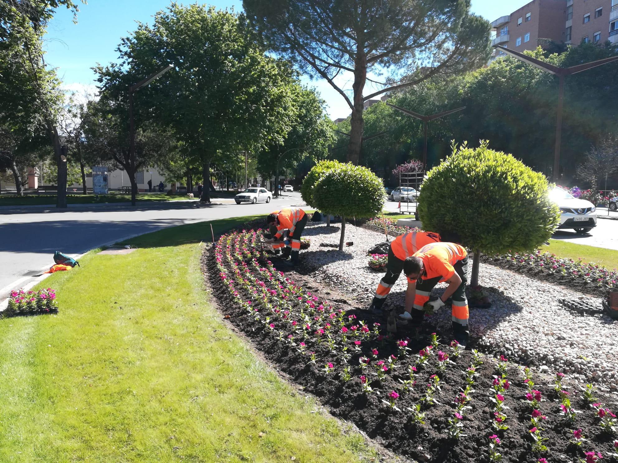 30.000 ejemplares de clavel y vinca adornarán numerosos espacios públicos de la ciudad de Guadalajara