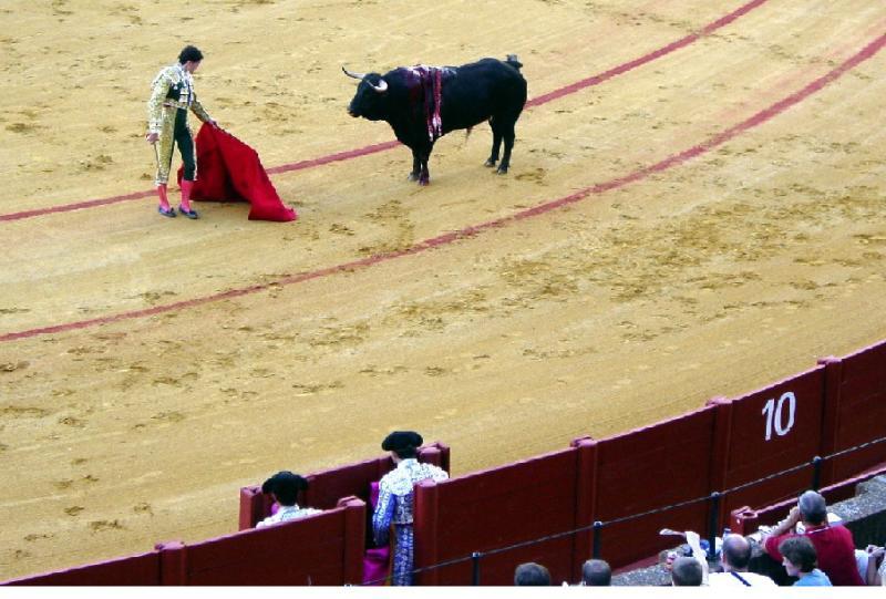 Las corridas de toros caen un 63% en España desde 2007