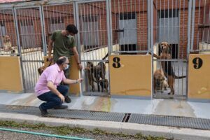 El Albergue Provincial de Animales de Cuenca consigue que en el último año un centenar de perros encuentren una familia