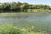 El Ayuntamiento solicita nuevamente a la CHT la retirada de algas en el río Tajo para mejorar el impacto visual y las condiciones medioambientales