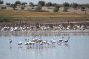 El Gobierno de Castilla-La Mancha celebra el 'Día Mundial de las Aves' los próximos dos fines de semana de octubre con numerosas actividades