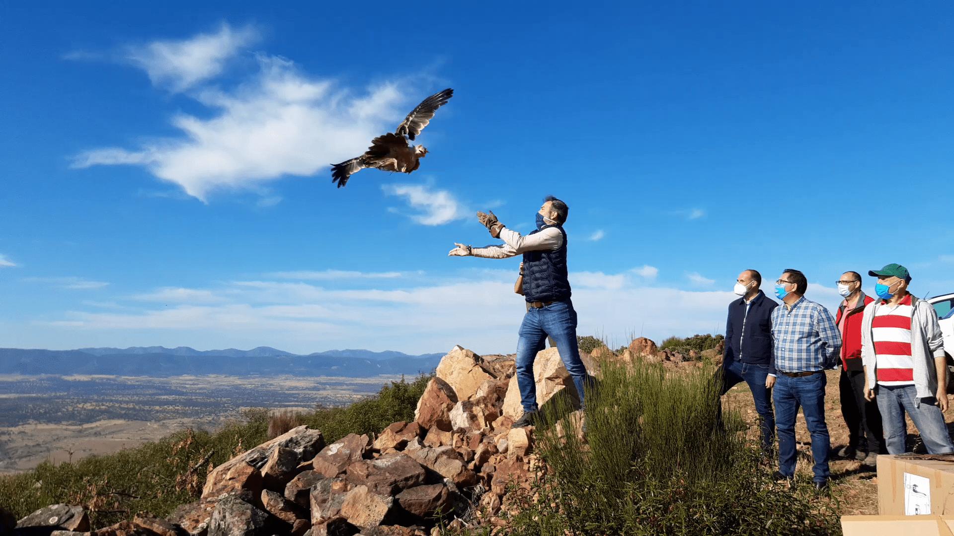 El Gobierno regional muestra su compromiso con la recuperación de la avifauna liberando dos águilas imperiales ibéricas en la comarca de La Jara
