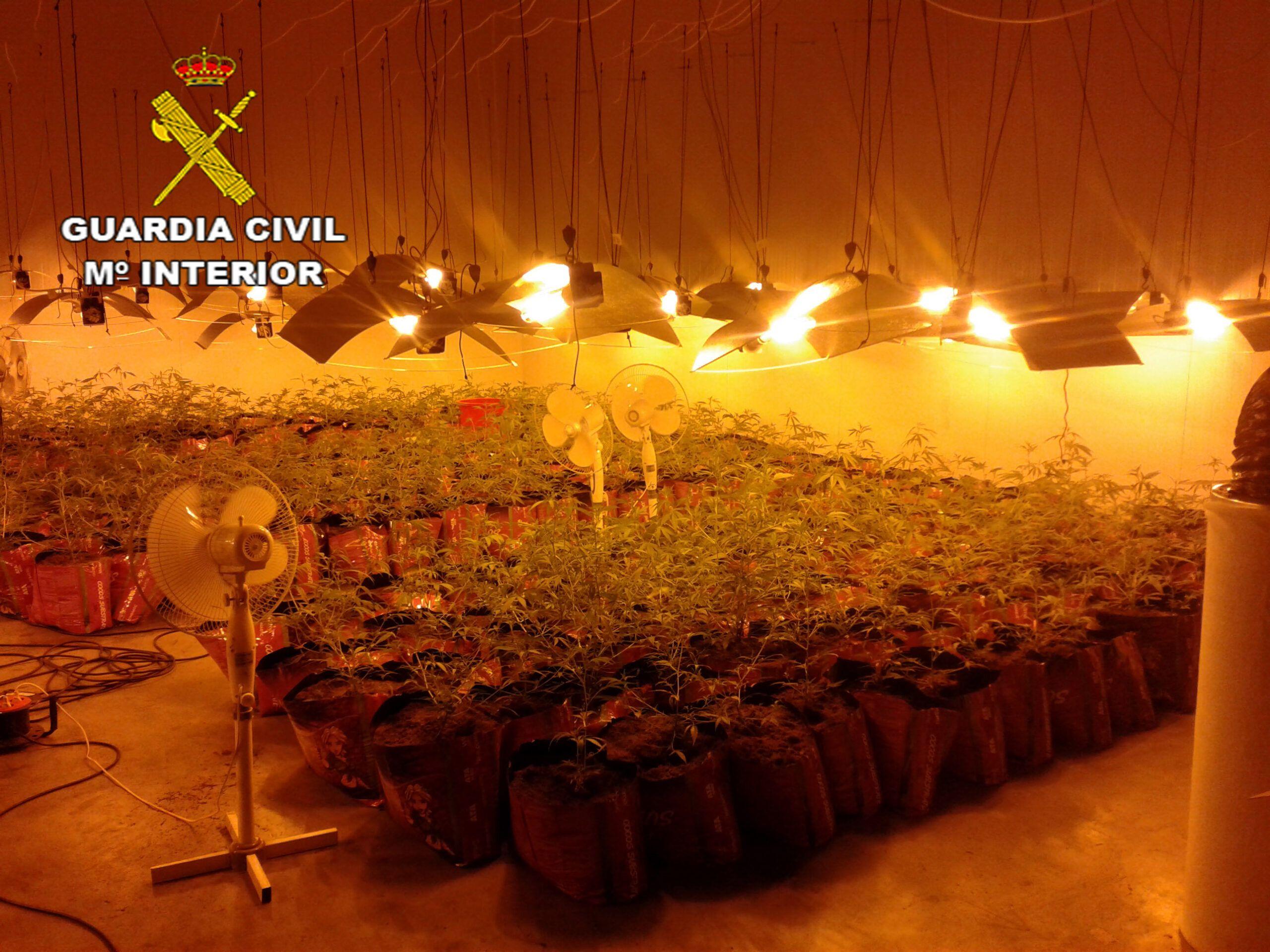La Guardia Civil detiene a 4 personas por cultivar marihuana en Marchamalo