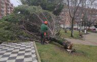 Los servicios municipales atienden más de una veintena de incidencias por el fuerte viento