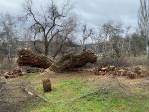 La Real Academia reivindica un Plan Director del Arbolado Urbano y un catálogo de árboles singulares