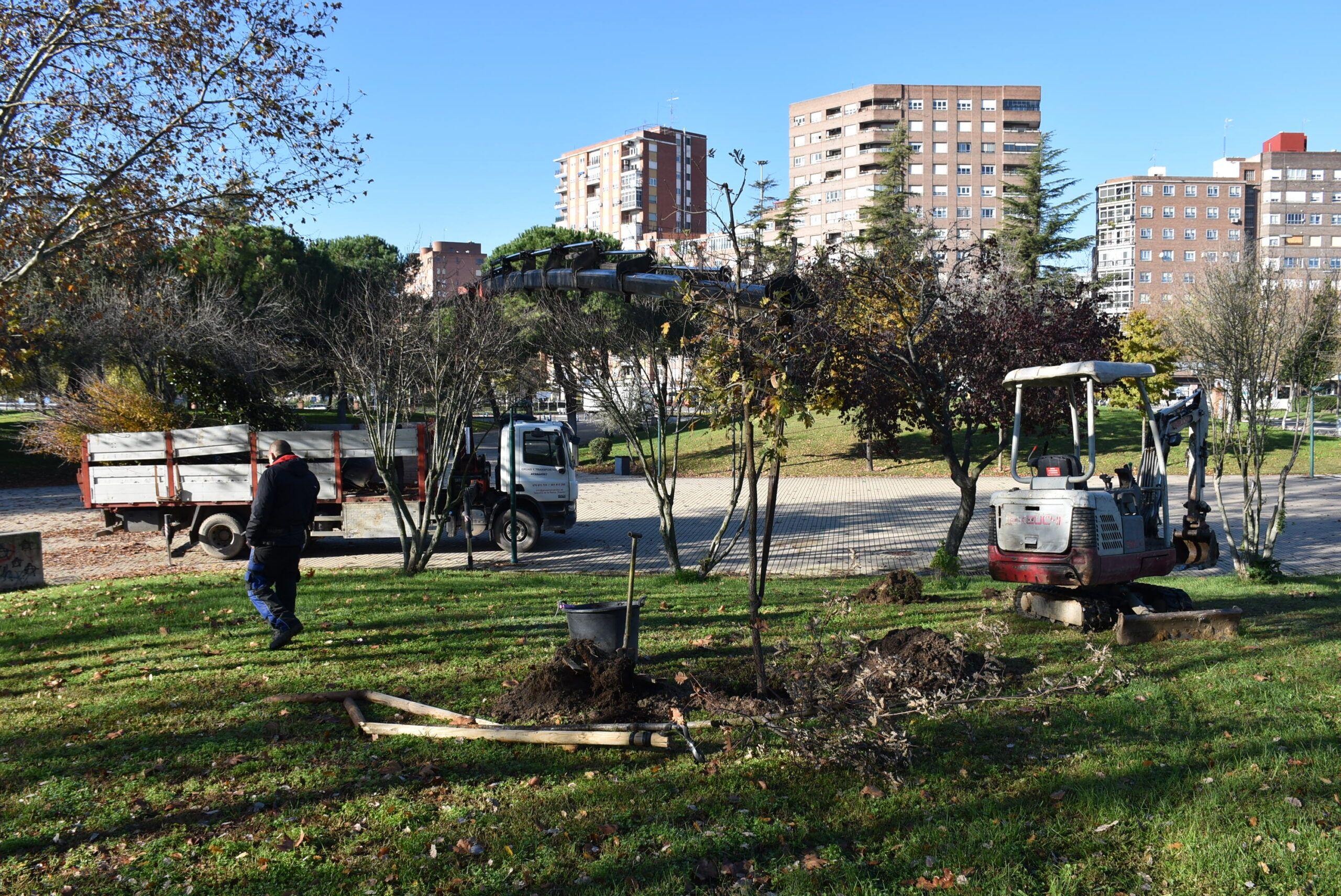 Cerca de 11.000 árboles 'censados' de 82 especies diferentes, datos fruto del estudio de arbolado de Talavera