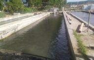 El Gobierno de Castilla-La Mancha destina más de 200.000 euros para el fomento de la acuicultura en la región