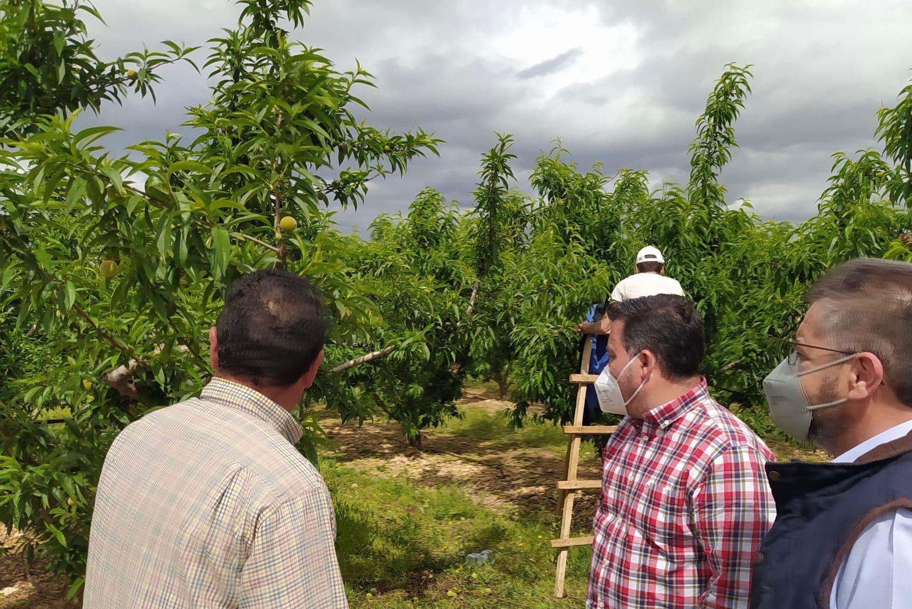 """Moreno reclama a Page """"que deje de estar en otras cosas"""" y se centre en los problemas de los agricultores de nuestra tierra, base fundamental de la economía regional"""""""