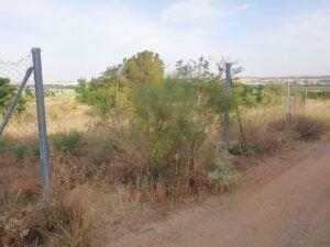 Ciudadanos insistirá para garantizar el acceso a los caminos públicos de Toledo tras el rechazo de Tolón a su propuesta