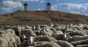 El Gobierno regional abona cerca de 11 millones de euros ayudas a la agricultura ecológica y al fomento del pastoreo en la provincia de Toledo