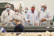 Castilla-La Mancha apuesta por el ajo morado de Las Pedroñeras como punta de lanza del sector por la economía social que genera en la región