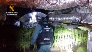 La Guardia Civil ha desarticulado un grupo familiar dedicado al cultivo y producción de marihuana en Torrejón del Rey