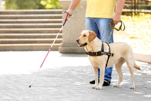 El Gobierno regional inicia el proceso de participación ciudadana del decreto que desarrolla la Ley de acceso al entorno de las personas con discapacidad acompañadas de perros