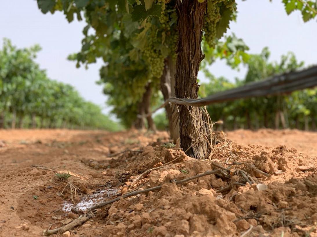 Castilla-La Mancha pone a disposición de los agricultores 3,9 millones de euros de ayudas para que mejoren energéticamente sus explotaciones