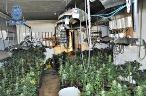 La Policía Nacional detiene a un matrimonio que ocultaba un cultivo ilegal de marihuana en su segunda vivienda