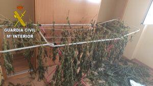 La Guardia Civil desmantela dos plantaciones de marihuana en Chiloeches y en Fuentenovilla